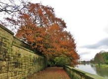 由湖的秋天树 免版税图库摄影
