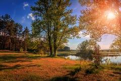 由湖的美丽的景色在日落期间的森林里在一个夏天 库存图片