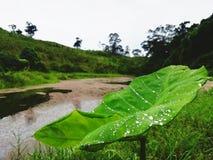 由湖的美丽的植物 免版税库存照片