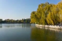 由湖的美丽的结构树 免版税库存图片