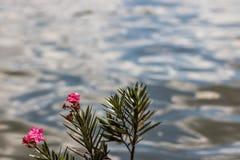 由湖的花 库存照片