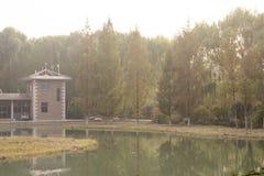 由湖的银杏树树 免版税图库摄影