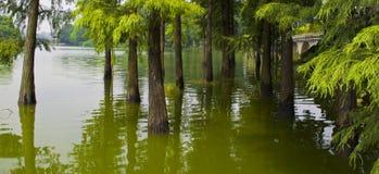 由湖的风景有绿色树的 库存照片