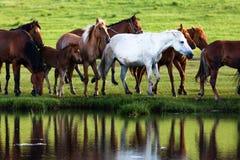 由湖的马 免版税库存照片