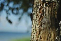 由湖的结构树 免版税图库摄影