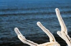 由湖的冻结的分支 免版税图库摄影