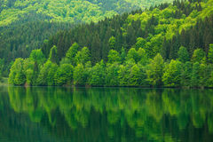 由湖的绿色森林反射水秀丽的本质上 库存照片