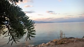 由湖边的杉木叶子 库存图片