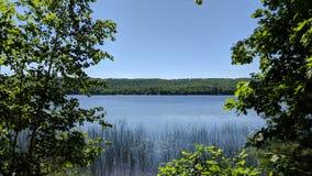 由湖边的树 免版税库存图片