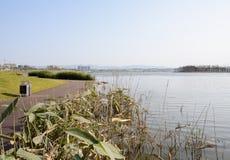 由湖边的水生草planked在晴朗的冬天下午的道路 库存图片