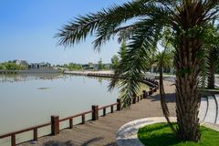由湖边的铁木树在以后晴朗的夏天城市planked道路 库存照片