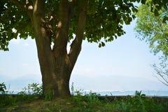 由湖风景的大树 免版税图库摄影