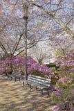 由灯岗位的公园长椅在公园 库存照片