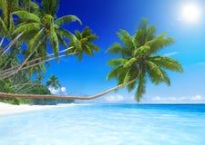 由热带天堂海滩的椰子树 免版税库存图片
