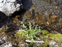 由熔化的雪做的一条小山小河 库存照片