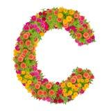 由百日菊属花做的信件C字母表 免版税图库摄影