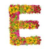 由百日菊属花做的信件E字母表 免版税库存照片
