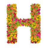 由百日菊属花做的信件H字母表 库存图片