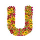由百日菊属花做的信件U字母表 免版税库存照片