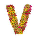 由百日菊属花做的信件v字母表 免版税库存照片