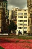 由真正的植物做的美丽的红色花地毯在阿尔伯特Squ 库存照片