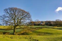 由石块墙的一棵孤立冬天树 免版税库存图片