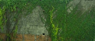由砖和水泥照片做的绿色生苔墙壁拍在雅加达印度尼西亚 免版税库存图片