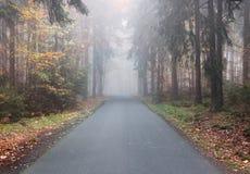 由秋天森林的空的柏油路 库存照片