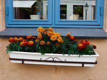 由窗口的美丽的开花的花 库存照片