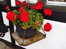 由窗口的美丽的开花的花 免版税库存图片
