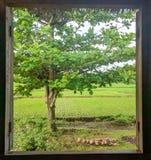 由窗架的自然 免版税库存照片