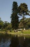 由美丽的湖的树 库存照片