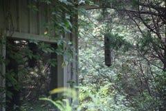 由老木大厦的鸟饲养者 库存照片