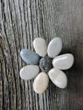 由自然石头做的花 库存照片