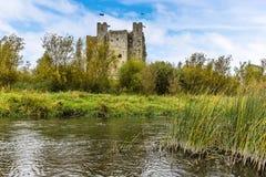 由芦苇床的一个看法横跨河Boyne的修剪的,爱尔兰 库存照片