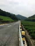 由茶树领域的路 免版税图库摄影