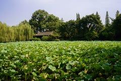 由荷花池的古老中国大厦晴朗的夏天下午的 库存照片