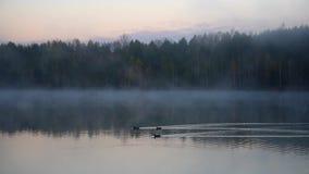 由蒸发池塘的早晨 影视素材