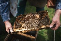 由蜂完全地盖的Beekeper与蜂窝一起使用 在养蜂家的细节 免版税库存图片