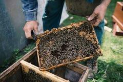 由蜂完全地盖的Beekeper与蜂窝一起使用 在apiaristà 'Â的手上的细节 免版税图库摄影