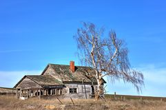 由被放弃的房子的树在华盛顿 库存照片