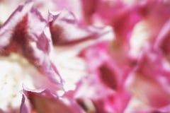 由装饰花的瓣做的抽象缎桃红色纹理,浅景深 库存照片