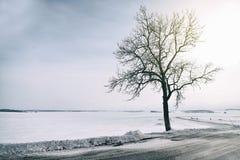 由路的冬天treee 库存图片
