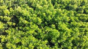 由路的狂放的生活,绿色灌木 库存图片
