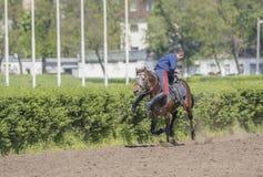 由运动员的讲话在跑马场的一匹马的开头的 免版税库存照片