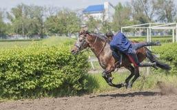 由运动员的讲话在跑马场的一匹马的开头的 库存照片