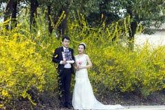 由金黄茉莉花开花,夫妇射击婚礼照片 图库摄影