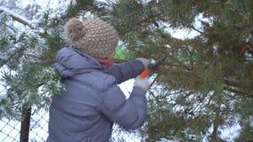 由锯的有吸引力的妇女切口杉木分支在她的冬天多雪的庭院里圣诞快乐和新年快乐 股票录像