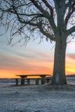 由长凳和树的五颜六色的日出 库存图片