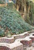 由长凳的绿色常春藤 图库摄影